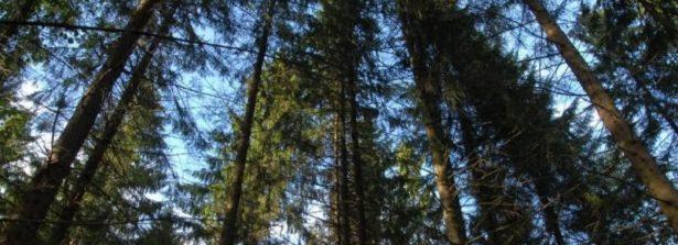 """Il 15 marzo il workshop bilaterale """"Ecologia e gestione delle foreste con il cambiamento climatico. Cooperazione Italia-Russia per soluzioni bio-sostenibili"""""""